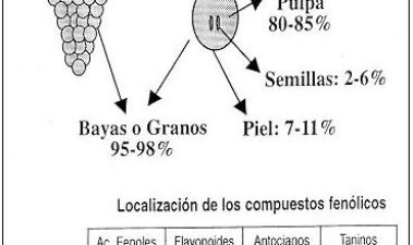 Viticultura de calidad: factores que afectan al contenido de compuestos fenólicos
