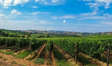 Elementos de la conducción de la viña que favorecen la protección del terruño y la expresión de sus vinos*