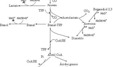Metabolismo de sustratos del mosto y vino por bacterias lácticas y sus implicaciones en la calidad del vino