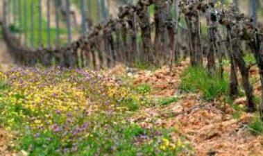 Producción integrada del vino: ejemplos de prácticas enológicas integradas