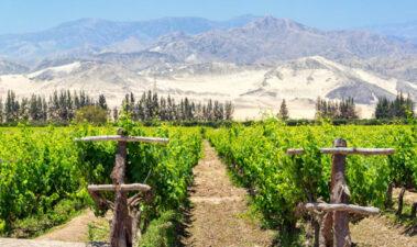 Niveles de grado alcohólico, acidez total y calidad sensorial de la cachina producida en el valle de Ica (Perú)