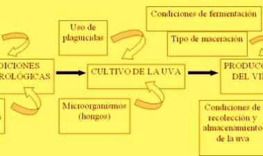 Factores determinantes de ocratoxina A en vino