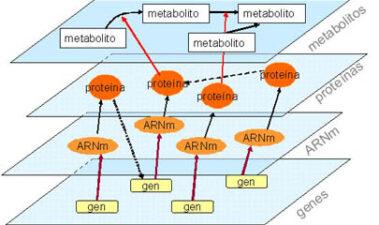 Enfoques genómicos, posgenómicos y genéticos para desvelar las propiedades de las levaduras