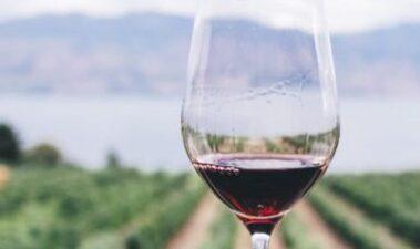 Características y operaciones en el viñedo: manejo orientado a la calidad de la uva