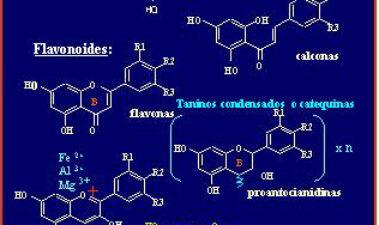 Metabolismo y significación biológica de los polifenoles del vino