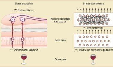 El análisis del aroma en el control de calidad de los vinos