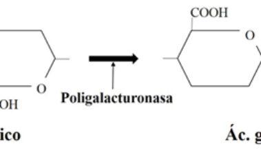 Actividades enzimáticas de levaduras no Saccharomyces para su aplicación enológica