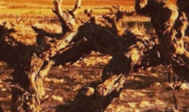 ¿El cambio climático en la viticultura o la espera a qué?