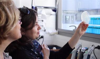 Detección y cuantificación de cepas Brettanomyces bruxellensis resistentes al sulfuroso por razones de estrategia hacia la prevención de alteraciones en el vino