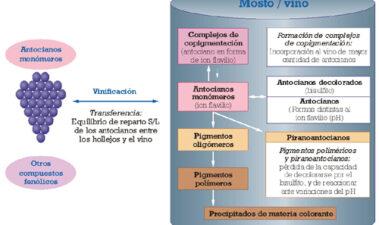 Copigmentación y piranoantocianos: el papel de los flavonoles y los ácidos hidroxicinámicos en el color del vino tinto