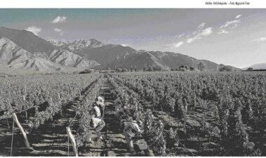 Reseña de la vitivinicultura argentina