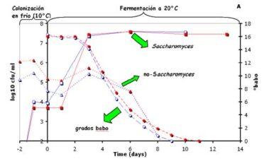 Lavado de la uva: efectos en la fermentación y en la composición del vino