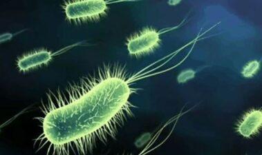 Fenoles contra patógenos intestinales como Helicobacter pylori