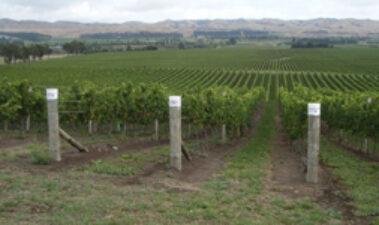 La viticultura en Nueva Zelanda