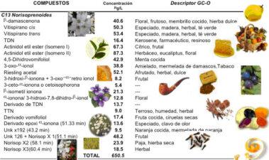 Potencial aromático de las principales variedades de uva cultivadas en climas cálidos: el caso de Sudamérica